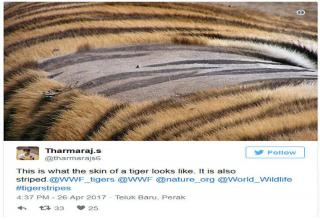 nobody really knew what was hidden under tiger s striped fur wow