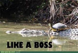 82214691 best of turtle meme's gallery ebaum's world
