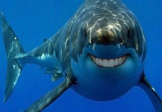 Can suggest sharks with people teeth
