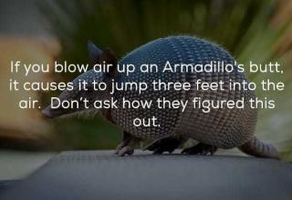 24 Random Facts That Will Entertain and Amuse