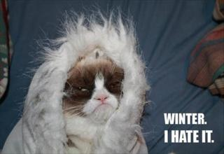 More of grumpy cat