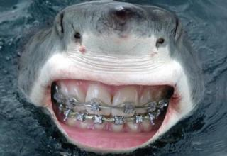 If Sharks Had Human Teeth, They'd Seem A Lot More Friendly ...