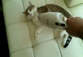 Cat loves vacuuming... view on ebaumsworld.com tube online.