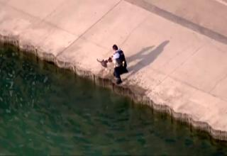 Chicago pd officer rescues drowning dog