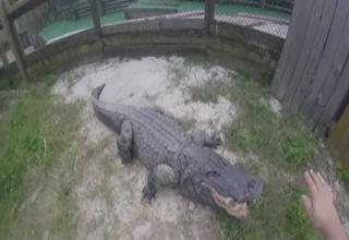 Florida Man Gives You A First Person View Of Kissing A HUGE Alligator