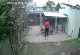 man in red shirt stealing a dog