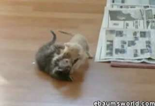 WayBack WHENsday: Cat Fight