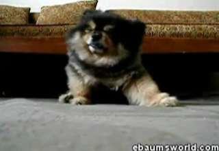 Cute Dog view on ebaumsworld.com tube online.
