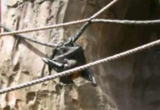 Violent Bat Rape view on ebaumsworld.com tube online.