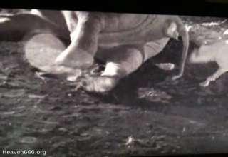 This Elephant Tastes Like Shit ! view on ebaumsworld.com tube online.