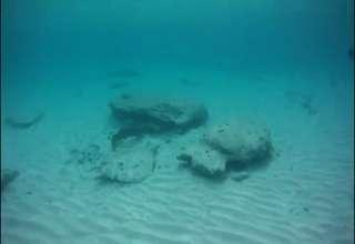 Green Moray Eel Attacks Snorkeler view on ebaumsworld.com tube online.