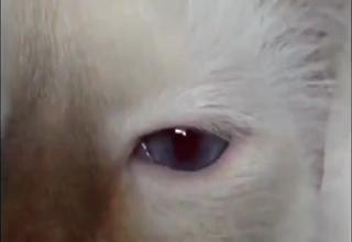 Cat's Eyes Change Color With Sound