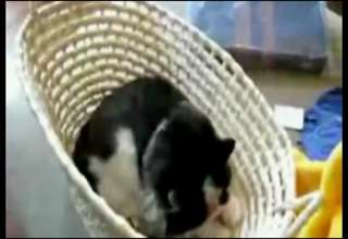 That There Cat Ain't Got No Face! view on ebaumsworld.com tube online.