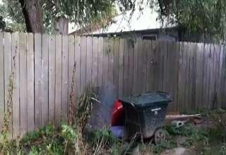 Ninja Dog Conquers Fence view on ebaumsworld.com tube online.