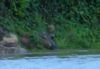 Battle Between Spotted Jaguar And Alligator view on ebaumsworld.com tube online.