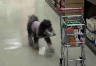 A Shopping Dog!! view on ebaumsworld.com tube online.