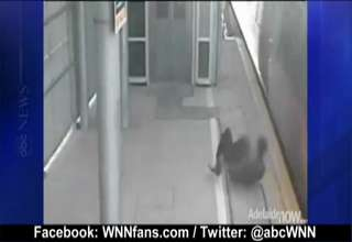 Thrill Seeker Almost Gets Killed by Train view on ebaumsworld.com tube online.