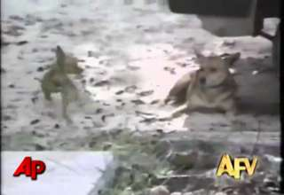America's Funniest Home Videos Animal Clips view on ebaumsworld.com tube online.
