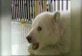 China Throws Party For Polar Bear Cub view on ebaumsworld.com tube online.