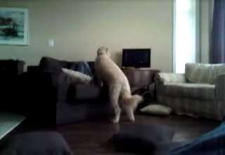 Girl Raped By Huge Dog view on ebaumsworld.com tube online.