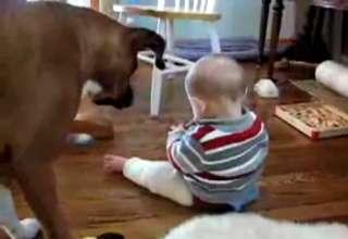 Baby Bullies Dog For His Bone view on ebaumsworld.com tube online.