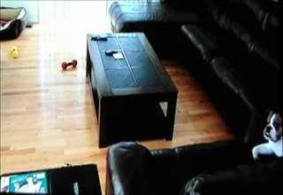 Dog Home Alone view on ebaumsworld.com tube online.