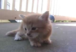 mamma cat comes to rescue baby kitty- CUTE view on ebaumsworld.com tube online.