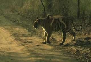 Baby riding Tiger