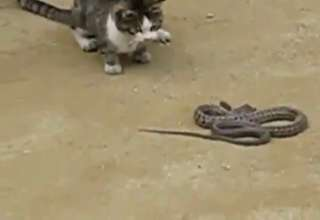 Cat vs Snake
