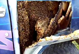 Man Finds Giant Bee Colony Inside Truck's Body