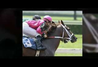 Horse Racing Tips - Free Horse Racing Tips for Today view on ebaumsworld.com tube online.