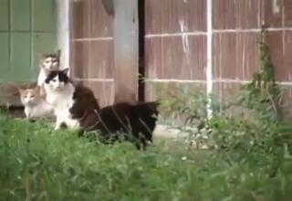 VIDEO: Giant rat fights with 4 alley cats