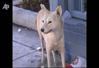 Man Steals Stuffed Animals, Seeking Companions view on ebaumsworld.com tube online.