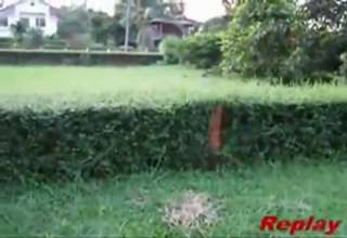Dog Can't Jump Over Hedge