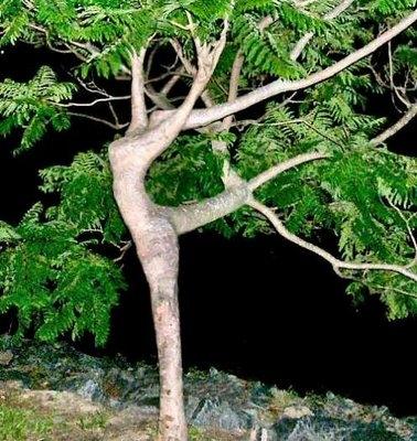Nature sex pics