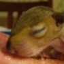 This baby squirrel just flies off the cuteness scale.