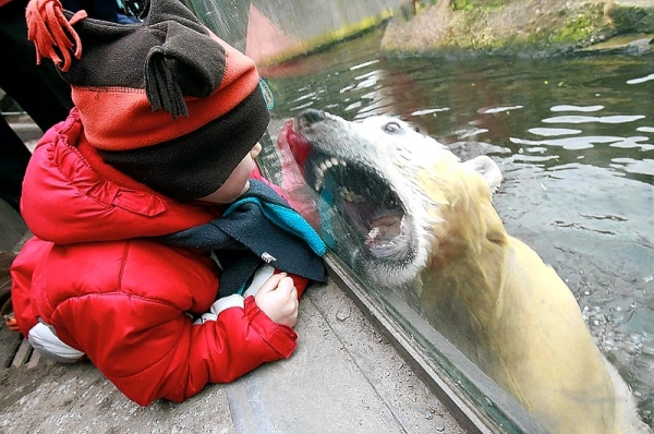 It's always nice to check out the cute and cuddly polar bears when visiting the zoo.