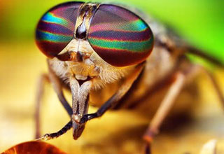 excellent close up pics of some awesome looking insects.