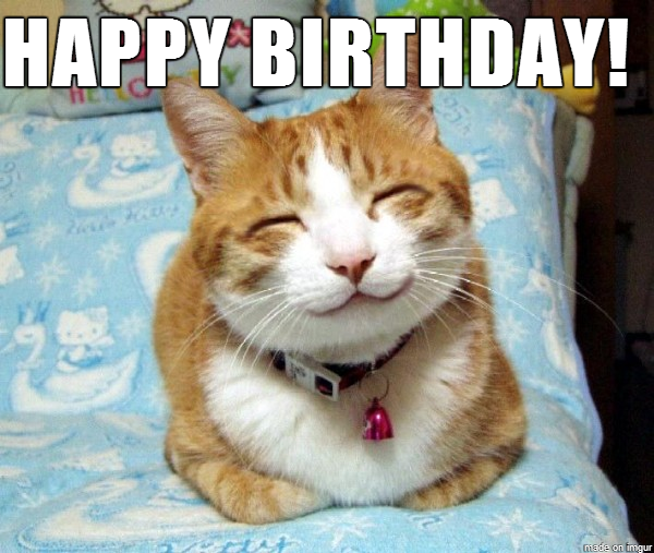 21 Cat Birthday Memes That Are Absolutely Purrrrfect ...