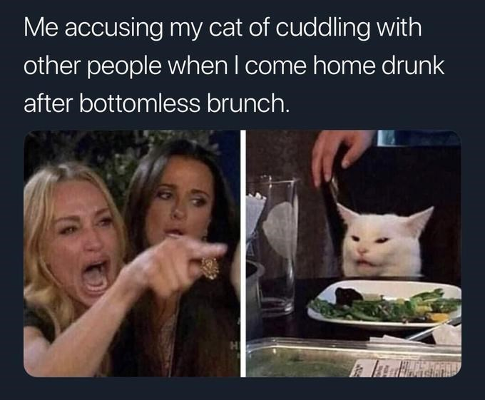 60 Best 'Woman Yelling at a Cat' Memes That Have Taken ...
