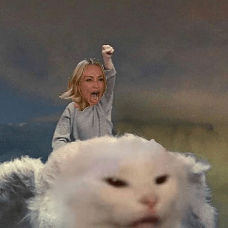 The Absolute Best Woman Yelling At Cat Memes Seriously