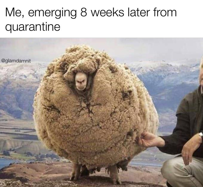 33 Accurate Memes About Our New Quarantined Reality ...
