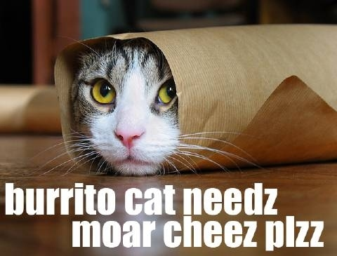 Cats Wrapped Like Burritos Gallery
