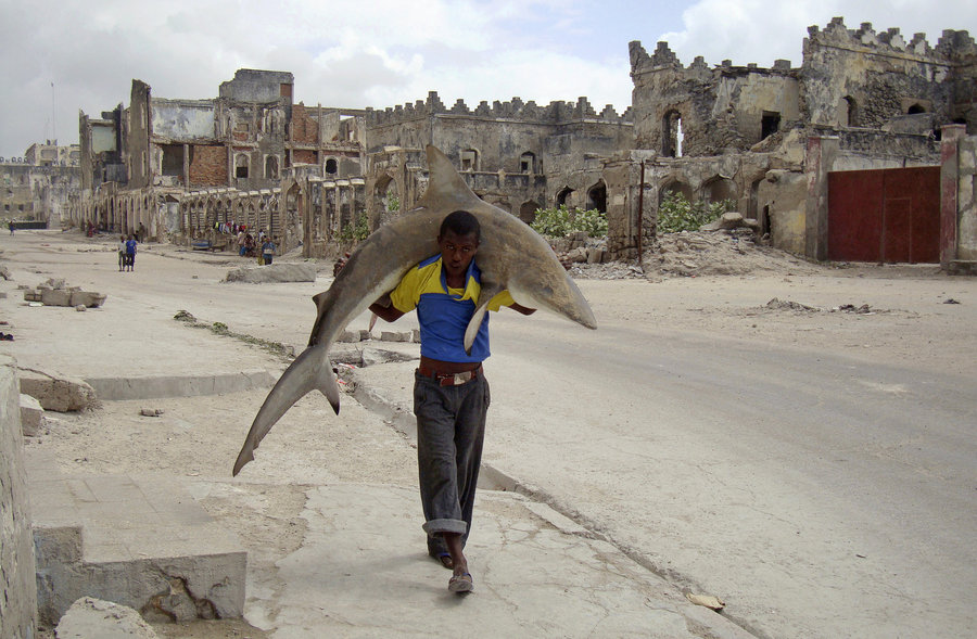 Even for sharks... They just don't give a FUCK in Mogadishu...