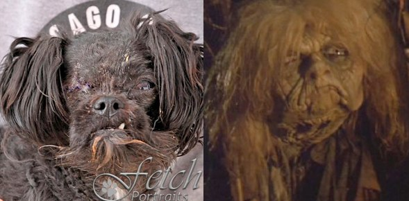 They found the Junk Lady from Labyrinth at an animal shelter in Chicago!