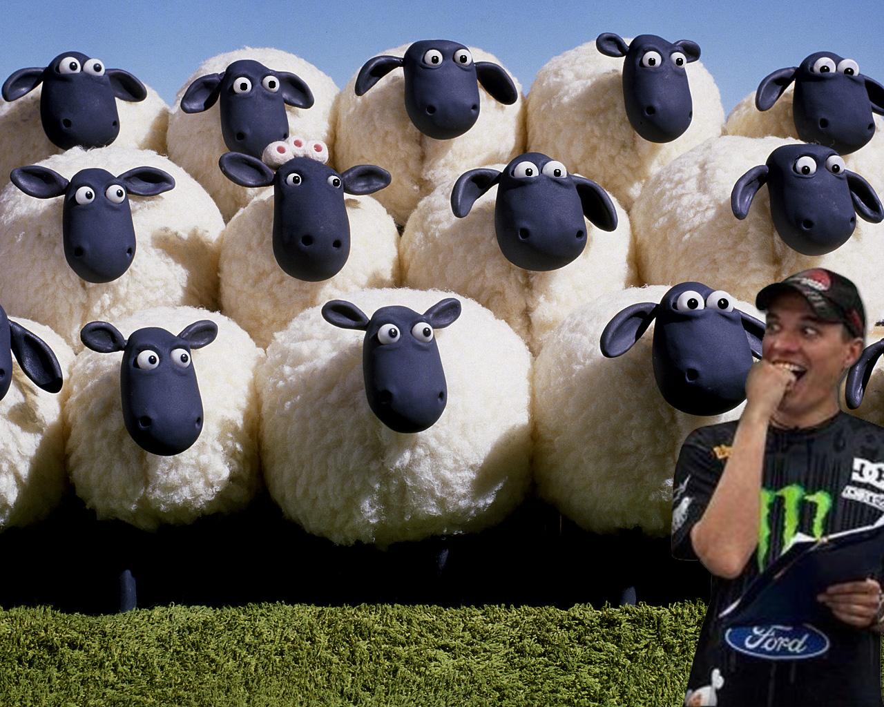 Scared sheep!
