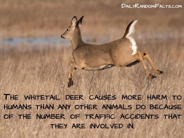 18 Weird And Random Animal Facts