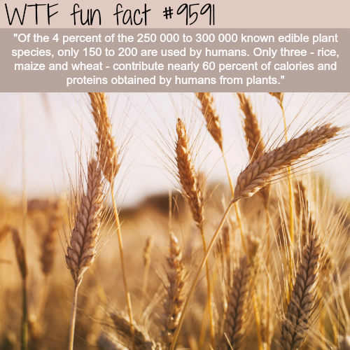 40 Fun Facts to Feed Your Mind - Wow Gallery | eBaum's World