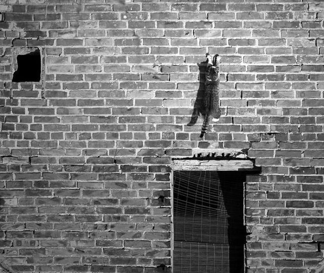 Scales this brick wall like a boss
