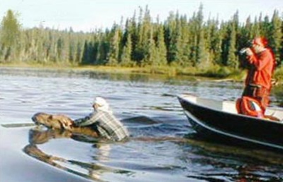Man jumps on the back of a moose while its swimming.